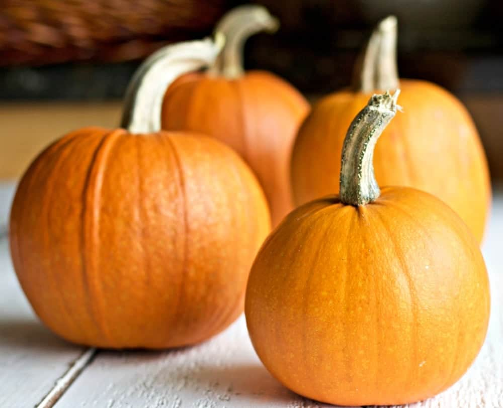 Pumpkin Pie Recipe For Fresh Or Canned Pumpkin Homemade